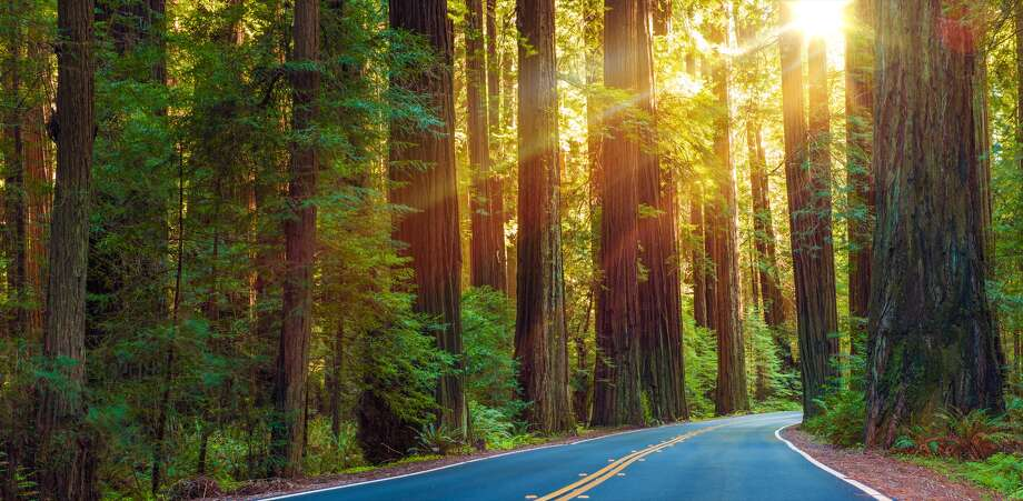 Redwood Highway. Highway 101, beginning at the Golden Gate and continuing for 350 miles through the world's tallest and only extensive preserves of virgin, old-growth coast redwood trees. Photo: Welcomia/Getty Images/iStockphoto / All Rights Reserved.