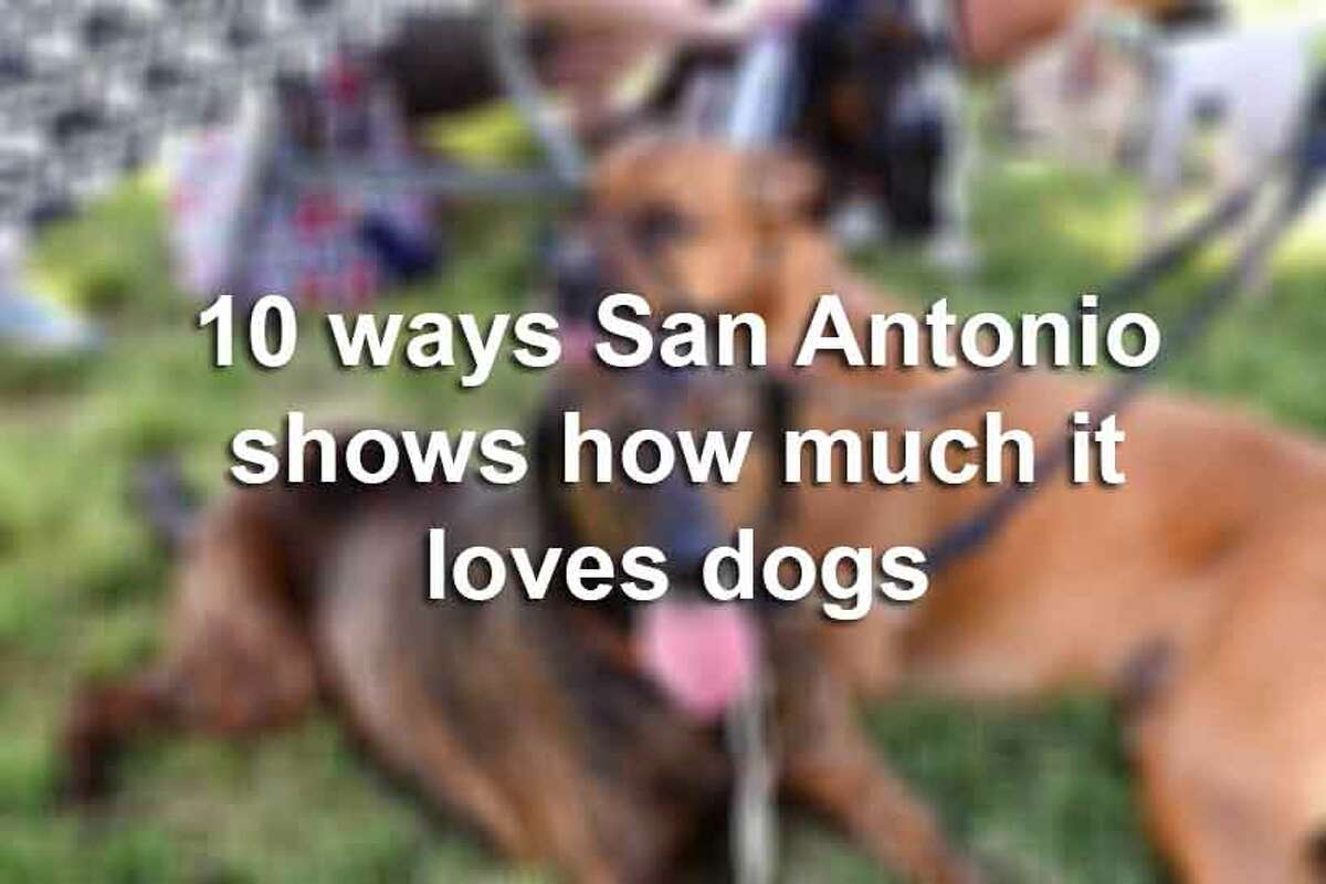 Keep clicking for proof that San Antonio is for the dogs.