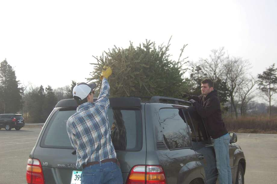 Town residents Jeffrey Jackson, at left, and Tyler Banks bring Jackson's Christmas tree to Greenwich Point as part of the town's ongoing Christmas tree recycling program, which lasts until the end of January. Photo: Ken Borsuk / Hearst Connecticut Media
