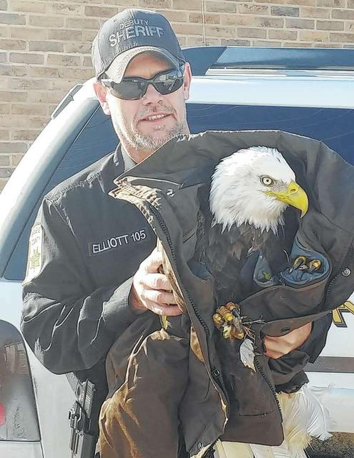 Greene County Sheriff's Deputy Cliff Elliot holds an eagle he rescued in November in Greene County.