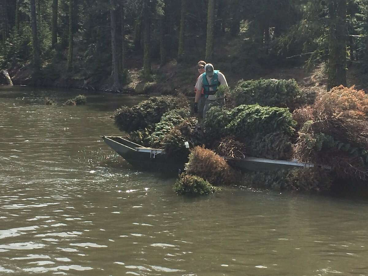 Biologists for the state Department of Fish and Wildlife deposit old Christmas trees into Mountain Meadows Reservoir in Lassen County to serve as fish habitat.
