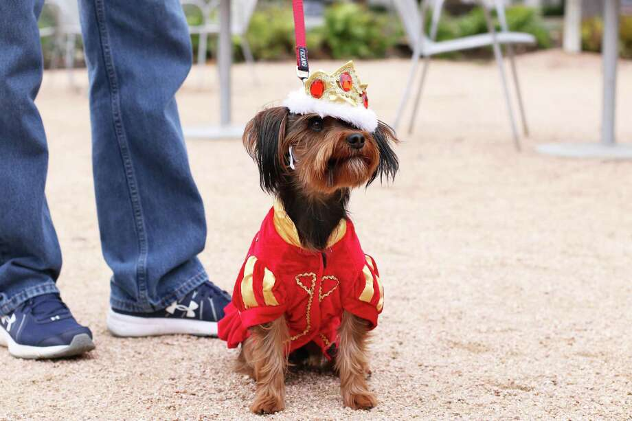 "The Brown Foundation, Inc. Plaza hosts ""Royals"" Doggie Day on Saturday. Photo: Sarah Hobson / Sarah Hobson"
