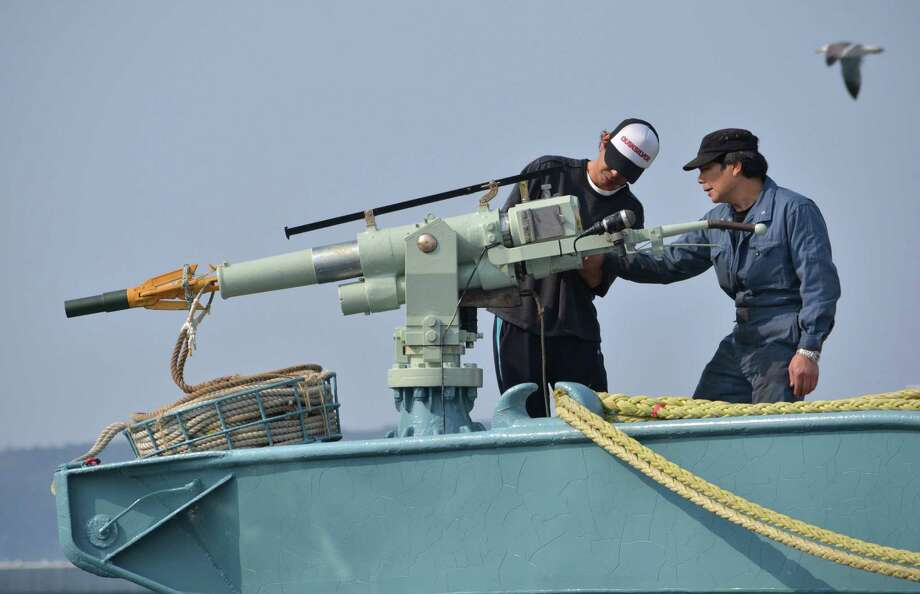(FILES) In this file photo taken on April 26, 2014, crew of a whaling ship check a whaling gun or harpoon before departure at Ayukawa port in Ishinomaki. - Japan has made good on years of threats by bolting the International Whaling Commission, but its decision may also offer a way out of tensions that looked inextricable. Japan, which calls whaling part of its cultural heritage, said on December 26, 2018, it would withdraw from the seven-decade-old commission which since 1986 has banned commercial killing of the ocean giants. But while Japan vowed to forge ahead with full-fledged commercial hunts off its coast, it put a halt to its most provocative whaling -- annual expeditions to the Antarctic which use an IWC loophole that permits whaling for scientific research. (Photo by Kazuhiro NOGI / AFP)KAZUHIRO NOGI/AFP/Getty Images Photo: KAZUHIRO NOGI / AFP or licensors