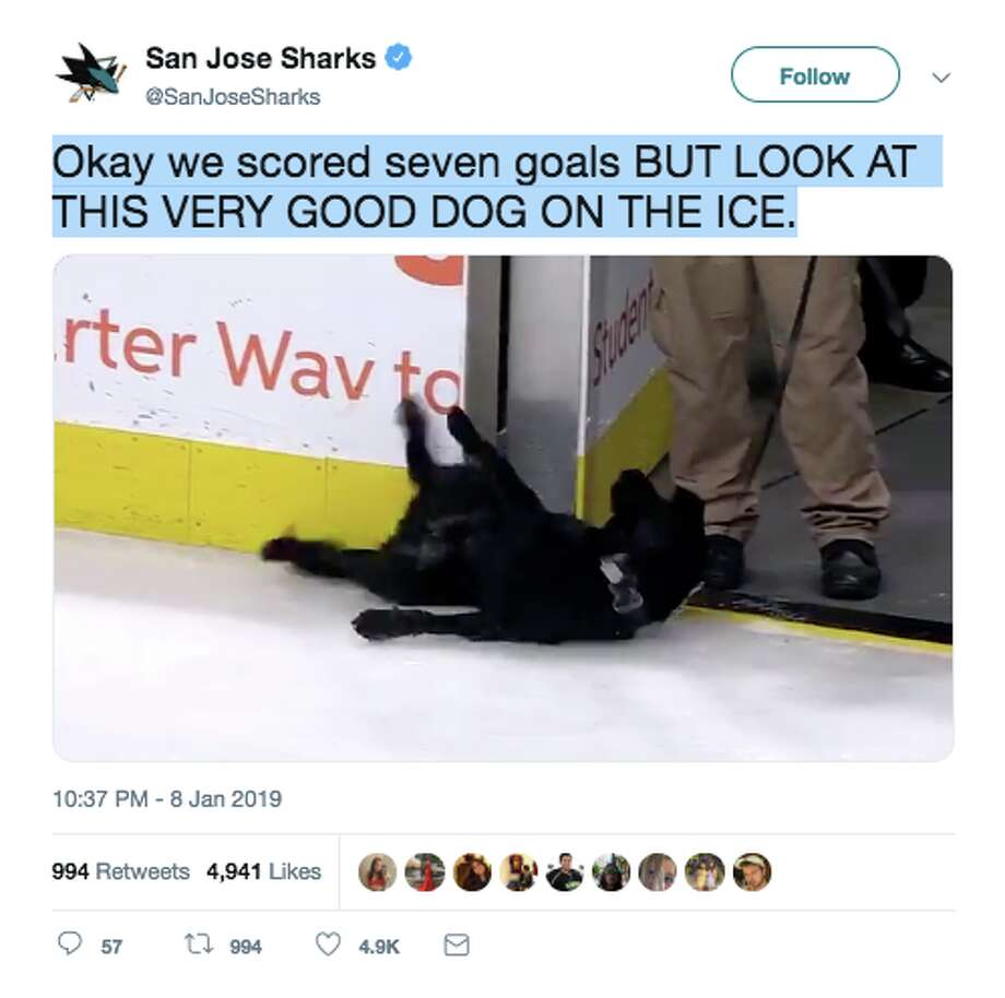 A dog named Basil stole hearts at the SAP Center and on the internet on Tuesday night. Photo: San Jose Sharks/Screenshot Via Twitter