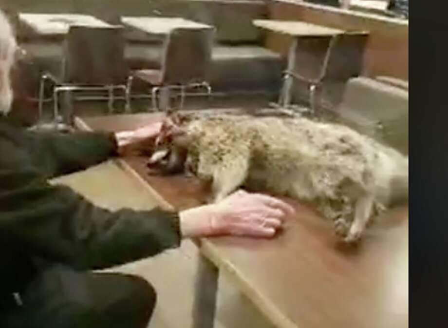 A man carried a dead raccoon into a San Francisco McDonald's on the morning of Jan. 6, 2018. Photo: Chris Brooks / Facebook Video Screen Capture