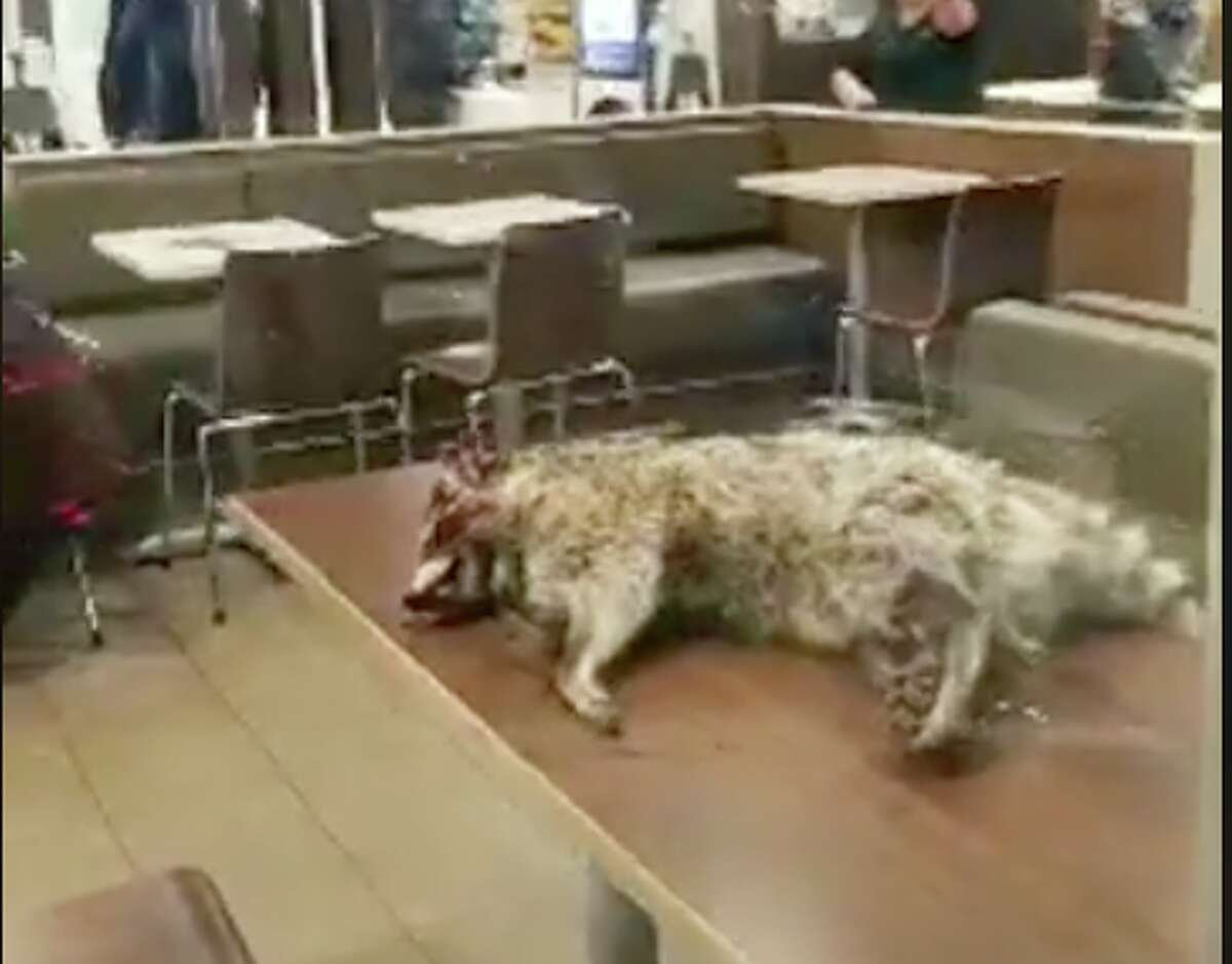 A man carried a dead raccoon into a San Francisco McDonald's on the morning of Jan. 6, 2018.