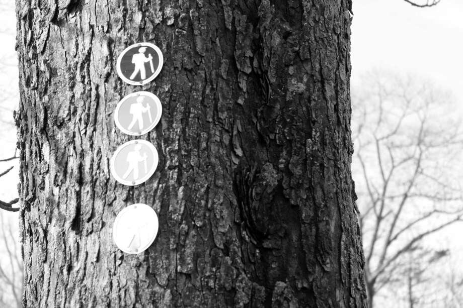 Signs on a tree in Waveny Park in New Canaan. Photo: Lynandro Simmons /Hearst Connecticut Media