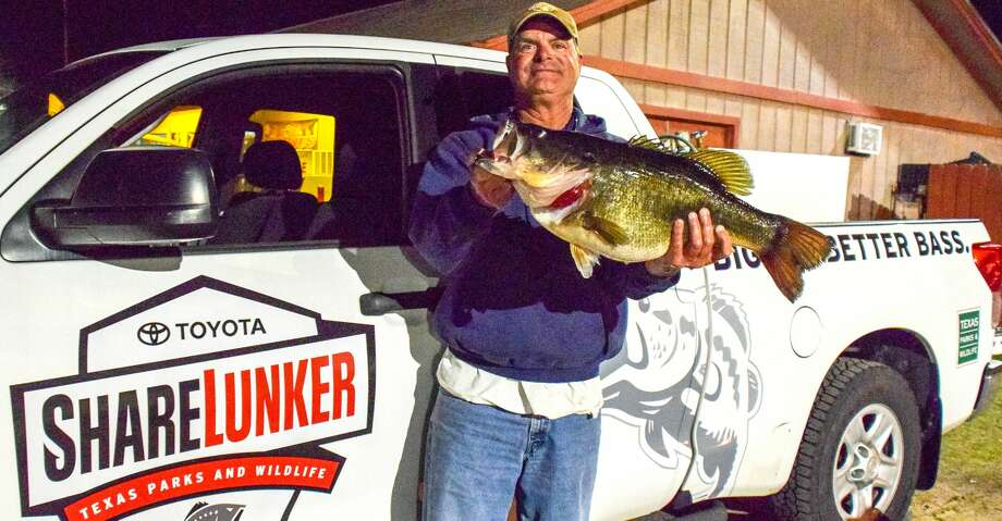 The just-completed first year of a redesigned and expanded Sharelunker program saw Texas anglers enter almost 500 largemouth bass weighing 8 pounds or more into the iconic 39-year-old cooperative research/hatchery project aimed at improving the state's largemouth fisheries. Photo: Texas Parks And Wildlife Departm
