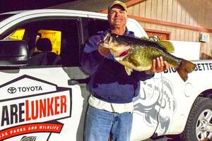 The just-completed first year of a redesigned and expanded Sharelunker program saw Texas anglers enter almost 500 largemouth bass weighing 8 pounds or more into the iconic 39-year-old cooperative research/hatchery project aimed at improving the state's largemouth fisheries.