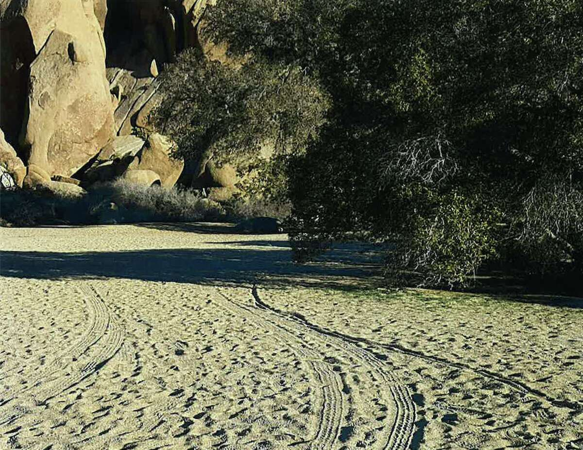 According to the National Park Service, visitors at Joshua Tree National Park routinely went off-roading through the desert. This picture shows some of their tracks. The park sustained extra damage during the partial government shutdown.