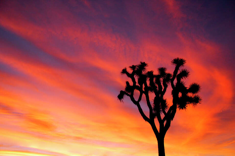 A Joshua tree silhouetted against the sky at the California park named for the protected tree. Photo: National Park Service/Brad Sutton / The Washington Post