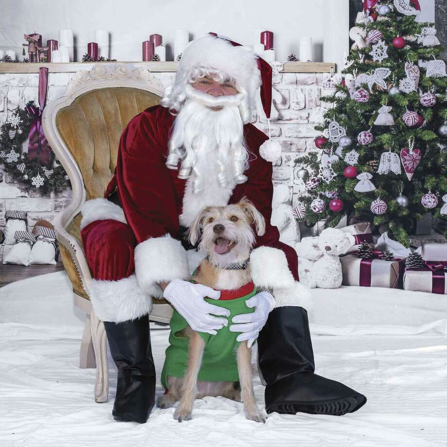 The first annual Photos With Santa & Paws was held at K-9 Angels Rescue in the Heights.