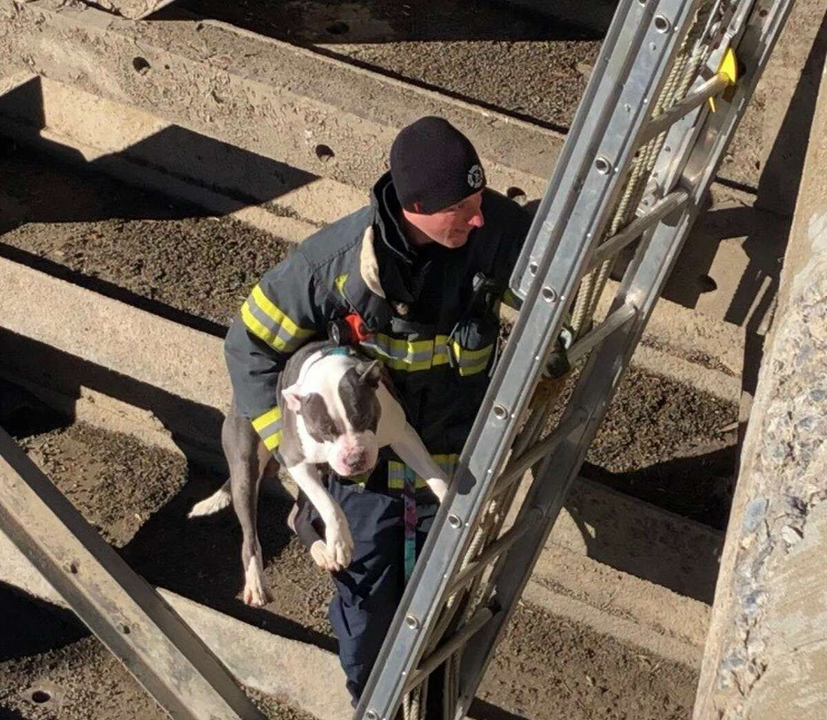 Beast, a pitbull, was rescued from the bottom of an Amsterdam canal lock Friday, Jan. 11.