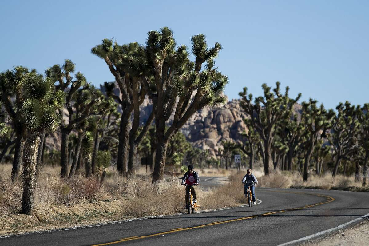 Two visitors ride their bikes along the road at Joshua Tree National Park in Southern California's Mojave Desert, Thursday, Jan. 10, 2019. The national park won't be closing because of the partial government shutdown after all. The National Park Service said it's freed enough money from recreation fees to prevent the closure of outdoor areas, although most visitor centers won't operate. (AP Photo/Jae C. Hong)