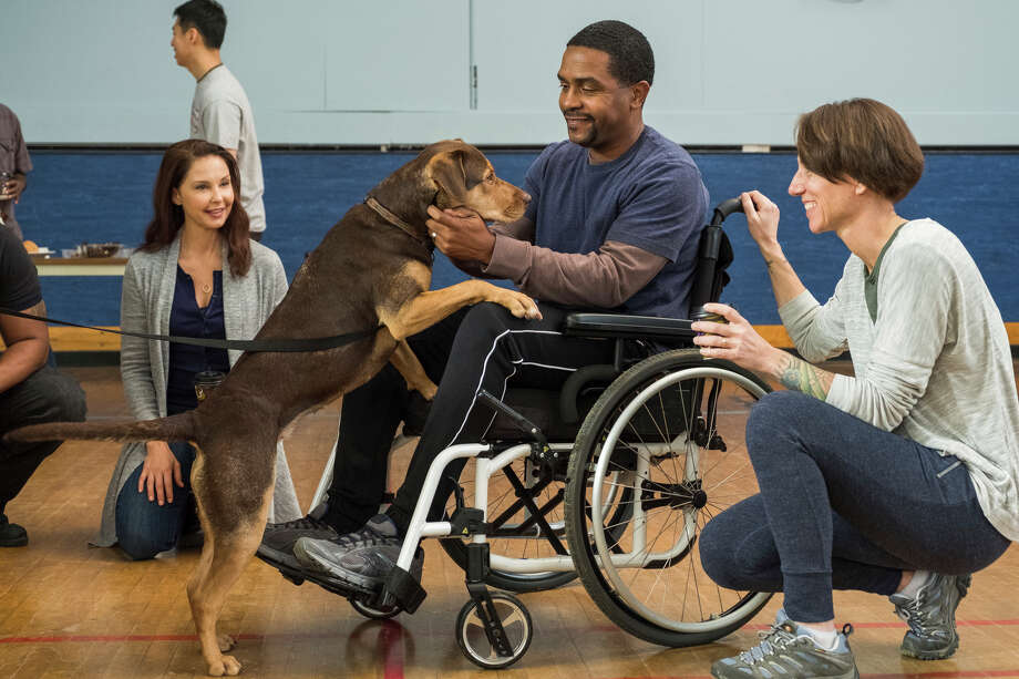 """This image released by Sony Pictures shows Ashley Judd, from left, Rolando Boyce and Annie Nelson in a scene from Columbia Pictures' """"A Dog's Way Home. (James Dittiger/Columbia Pictures - Sony via AP) Photo: James Dittiger / ©2018 CTMG, Inc. All Rights Reserved. **ALL IMAGES ARE PROPERTY"""