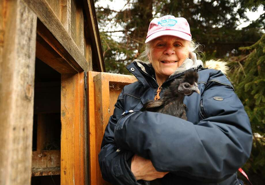 Gail Bunovsky maintains two coops of organically fed chickens as well as horses on her 2 acre property in Monroe, Conn. on Thursday, January 10, 2019. Monroe recently amended its regulations to allow chickens on property less than 2 acres, provided the coops are set far enough back from the property line. Photo: Brian A. Pounds / Hearst Connecticut Media / Connecticut Post