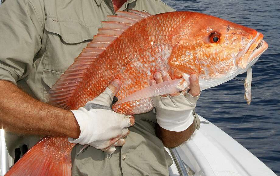Texas anglers could reel in $250 by catching specially