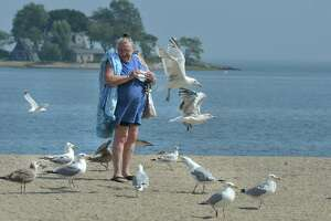 In a file photo from last summer, a woman walked along Calf Pasture Beach in Norwalk. There is a proposal in the General Assembly to turn it into a wildlife preserve and ban bird hunting.