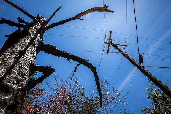 A burned out tree stands near one of many replaced PG& power poles along Mount Veeder Rd., Saturday 09  June 2018 in Napa, CA. On Monday, PG& announced it would file for bankruptcy protection at the end of January. (Peter DaSilva Special to the Chronicle)