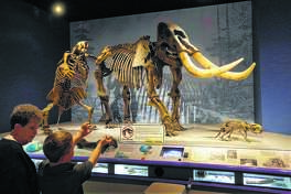 A woman and her grandson talk about the giant American Mastodon, right, and Ground Sloth, left, while visiting the Illinois State Museum in Springfield, which won Leader Institution of the Year (2018) from the Illinois Association of Museums.