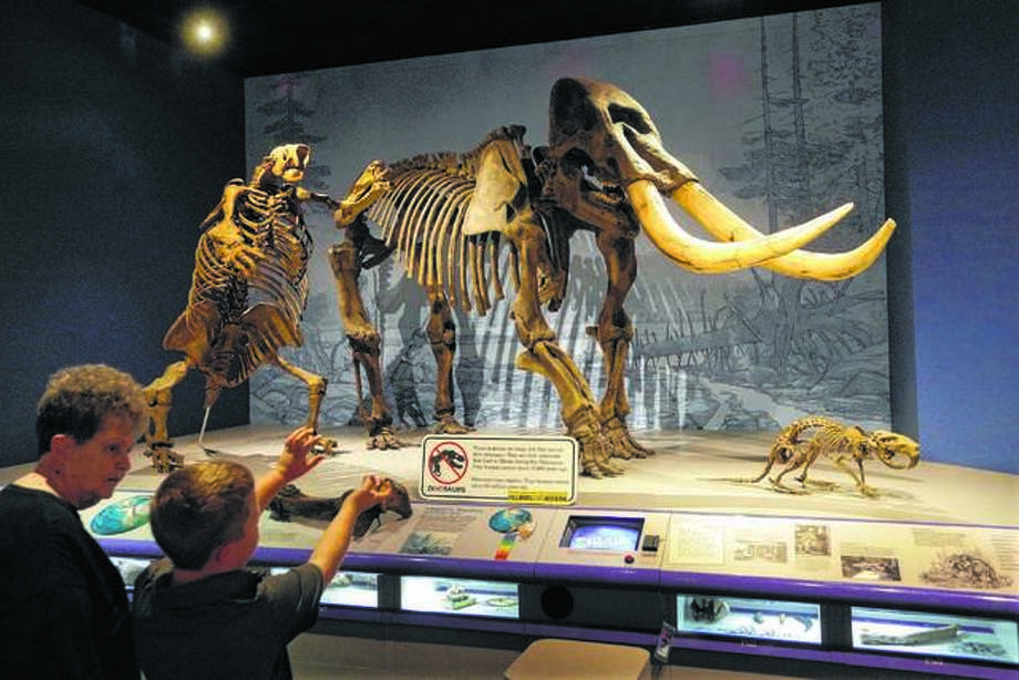 A woman and her grandson talk about the giant American Mastodon, right, and Ground Sloth, left, while visiting the Illinois State Museum in Springfield, which won Leader Institution of the Year (2018) from the Illinois Association of Museums. Photo: Seth Perlman | AP